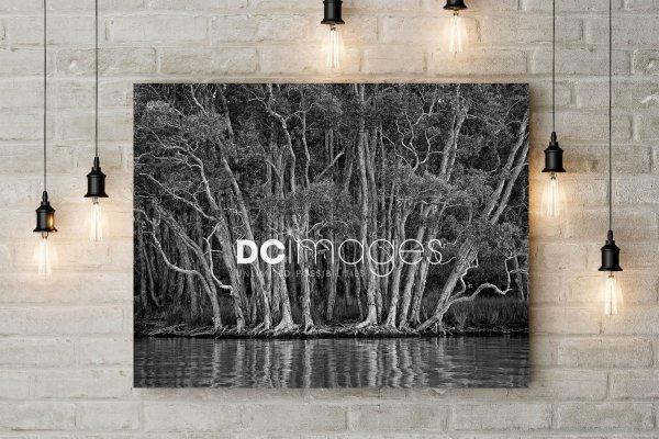 DC Images - Fine Art Prints